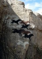 horses at Ghost Ranch exhibit